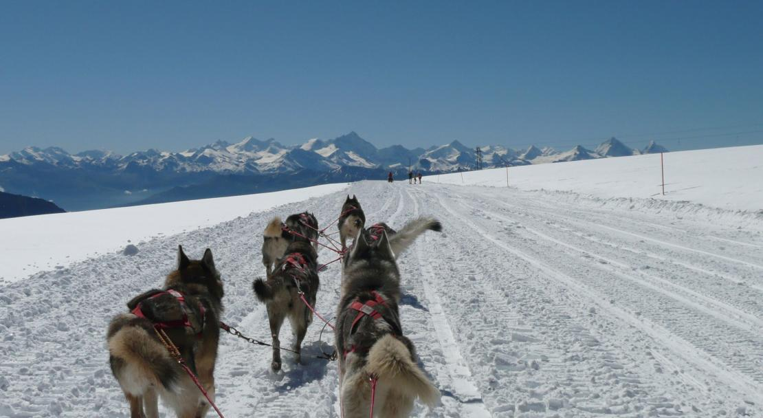 Huskys in Gstaad