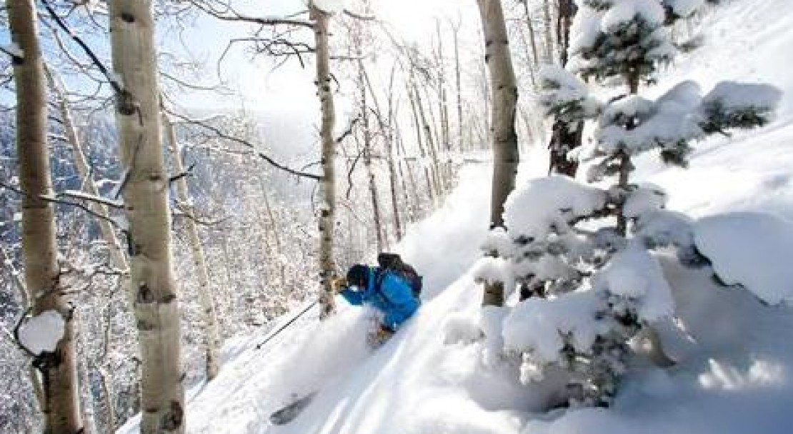 Beaver Creek's gladed tree runs