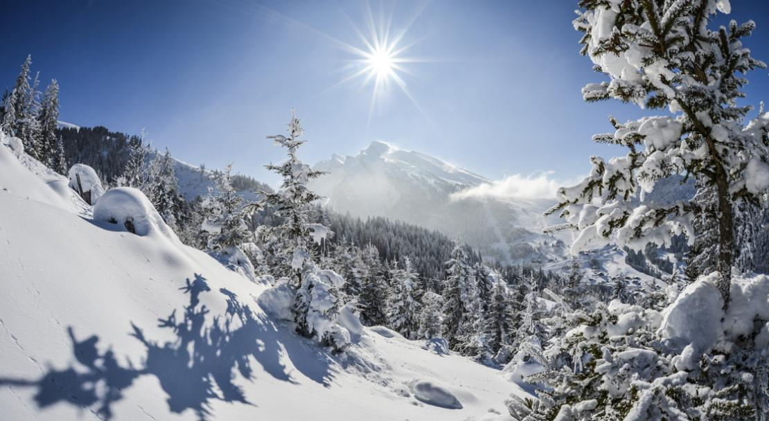Snowy trees in La Clusaz; Copyright: David Machet