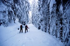 Cross country skiing through the trees in Argentiere's winter wonderland