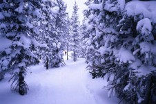 With 220km and four different cross country skiing areas Winter Park is an excellent resort for Nordic skiing.
